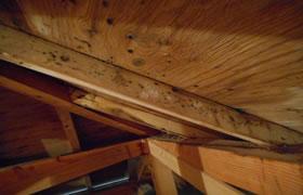 天井裏のカビの事例写真